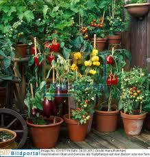 topfpflanzen balkon details zu 0003157778 naschbalkon obst und gemüse als