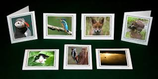 photo greeting cards caunt photography greeting cards