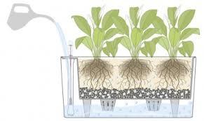 self watering indoor planters why we love self watering planters zerosoil gardens