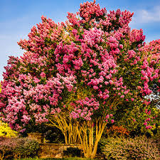 trees with pink flowers flowering trees small ornamental trees for your area