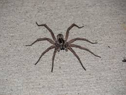 pictures of florida house spiders house interior