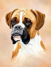 boxer dog art boxer dog video course colin bradley art