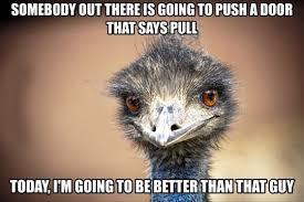 Encouragement Memes - self encouragement emu meme funny goblin