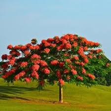 flowering trees small ornamental trees for your area