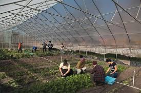 how michigan farmers grow in the winter edible wow