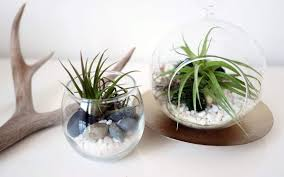cool terrarium ideas that you can copy