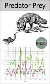 predator prey relationship and graph environmental science