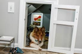 chambre pour chien ce chien s est fait construire une chambre de rêve sous un