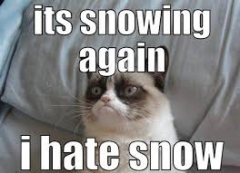 Aspca Meme - cat snow 5 animal shelter inc of sterling