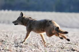 Indiana wild animals images Wildlife marion swcd jpg