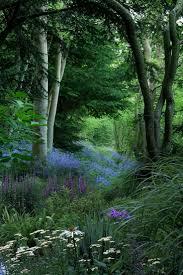 Beautiful Garden Pictures Best 25 Woodland Garden Ideas On Pinterest Forest Garden