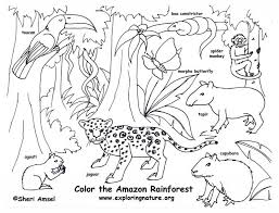 tropical rainforest coloring pages to invigorate in coloring page