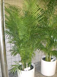 non toxic houseplants plants deemed safe for pets and kids