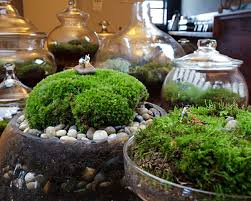 small indoor garden ideas lawn u0026 garden indoor small gardening ideas to decorate in your