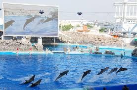 japanese aquarium japan s top 10 aquariums all about japan