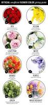 Flower Colour Symbolism - best 25 flower meanings ideas on pinterest birth flowers