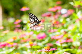 butterfly perched on a flower in peace seems to be resting