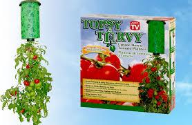 topsy turvy upside down tomato planter expert advice