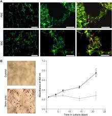 the use of glandular derived stem cells to improve vascularization