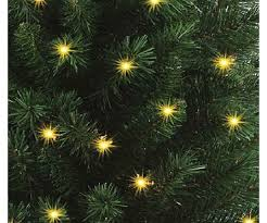 live potted christmas trees for sale nj best images collections