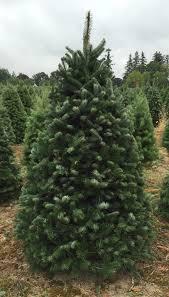wood mountain christmas trees