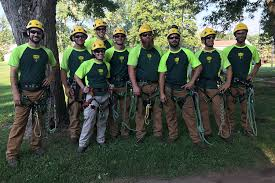 bartlett tree experts tree service and shrub care in york pa