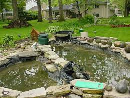a backyard fish pond enlarged 2002