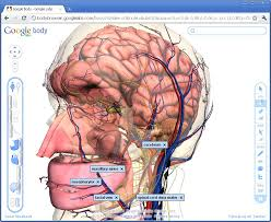 Google Body Anatomy Google Body Ucl Digital Education Team Blog