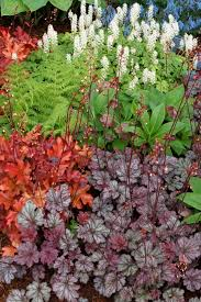 shadow play clever plant combos brighten shady gardens