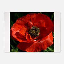 Poppy Area Rug Poppy Rugs Poppy Area Rugs Indoor Outdoor Rugs