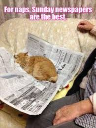 Newspaper Cat Meme - feline muscle condition score kitties pinterest cat
