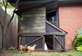 our diy urban backyard chicken coop