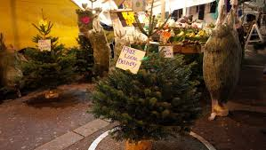where to buy a real tree in brixton