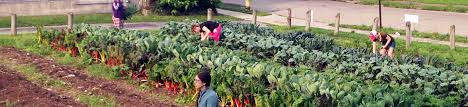 Types Of Community Gardens - the dayton foundation for not for profits types of grants
