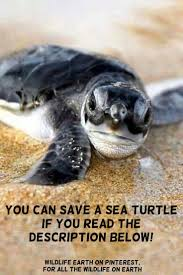 best 25 what turtles eat ideas on pinterest baby turtles