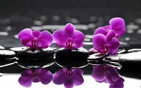 imagenes zen gratis purple orchid flores zen fondo de pantalla fondos de pantalla gratis