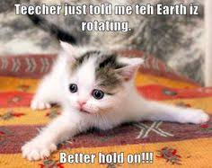 Cute Animals Memes - lol pics of animals 09 32 15 am friday 17 april 2015 pdt 20