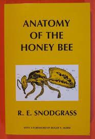 honey bee anatomy images learn human anatomy image