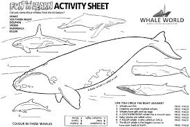 whale unit activity sheets coloring sheets pinterest whales