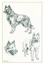 belgian sheepdog artwork belgian tervuren collectibles ebay