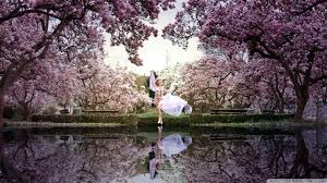 beautiful spring wallpapers pictures images 1920x1080 962 99 kb