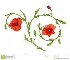 poppy flower ornament element on white stock photo image