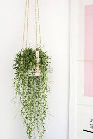 Wall Planters Indoor by Best 20 Diy Hanging Planter Ideas On Pinterest Hanging Plants