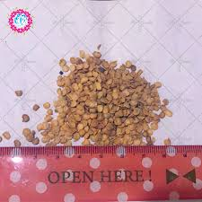 aliexpress buy 100 grains bag color small pepper seeds