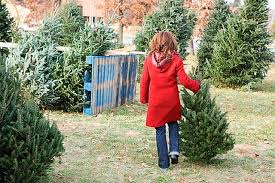 kent offers free curbside tree jan 2 6 kent