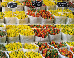 Best Flower Food The Best Places To See Tulips In The Netherlands