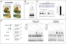genetic and functional modularity of hox activities in the