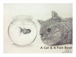 a cat u0026 a fish bowl which pet would you prefer to have this my