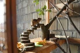 gabbie scoiattoli amici animali