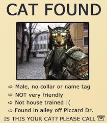Funny Skyrim Memes - skyrim meme cat found gif